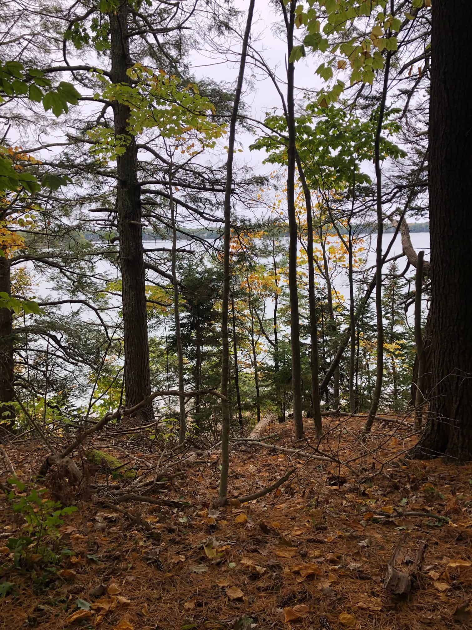 Wolfe's Neck woods State park with a view of Casco Bay behind the trees, Maine