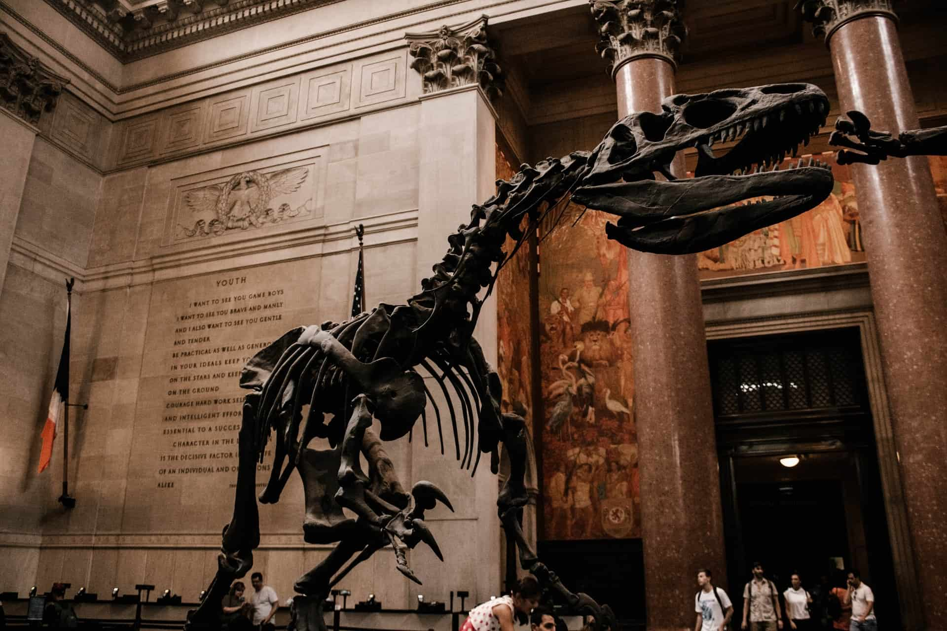 the American Museum of Natural History is one of the fun museums in nyc and best museums for kids nyc